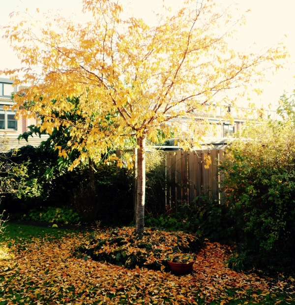 Herfst, gekleurde gedachten, Karien Damen