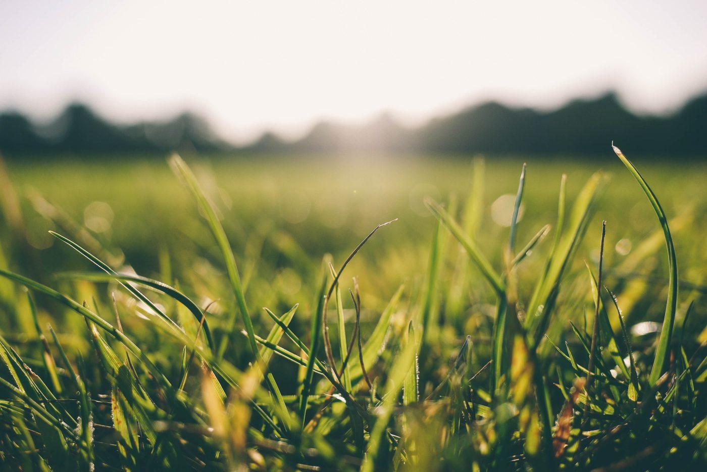 Gras, gekleurde gedachten, Karien Damen