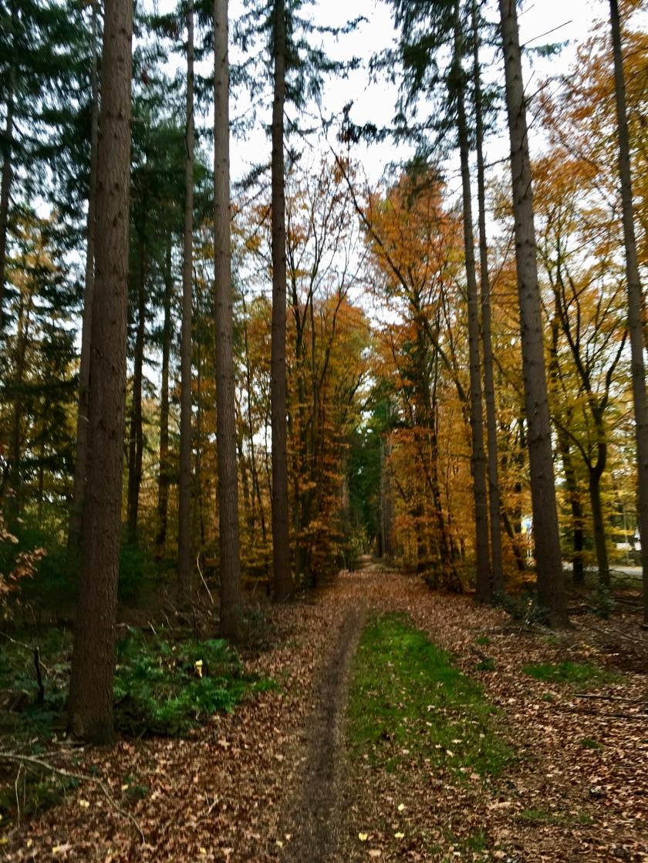 Herfst in Hellendoorn, Gekleurde Gedachten, Karien Damen, Huisje10